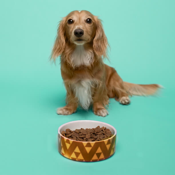 doggo posing image